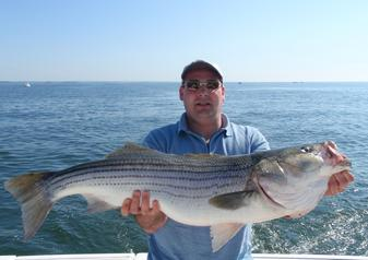 A large, 18-pound striped bass caught on Long Island Sound