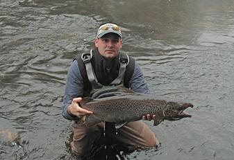 A large Atlantic Salmon caught fly fishing the Naugatuck River in Connecticut